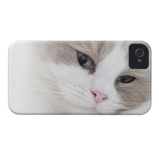 Ragdoll cat iPhone 4 case