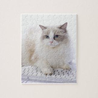 Ragdoll cat jigsaw puzzle