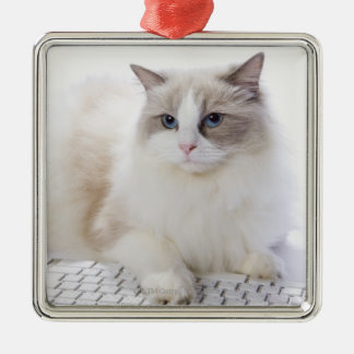Ragdoll cat on computer keyboard Silver-Colored square decoration