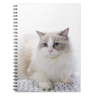 Ragdoll cat on computer keyboard spiral notebook