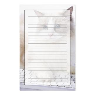 Ragdoll cat on computer keyboard stationery