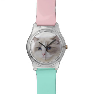 Ragdoll cat on computer keyboard watch