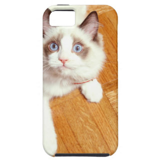 Ragdoll cat on floor, elevated view iPhone 5 cover