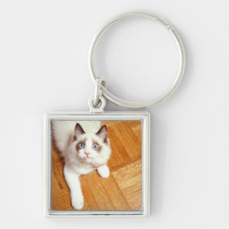 Ragdoll cat on floor, elevated view Silver-Colored square key ring