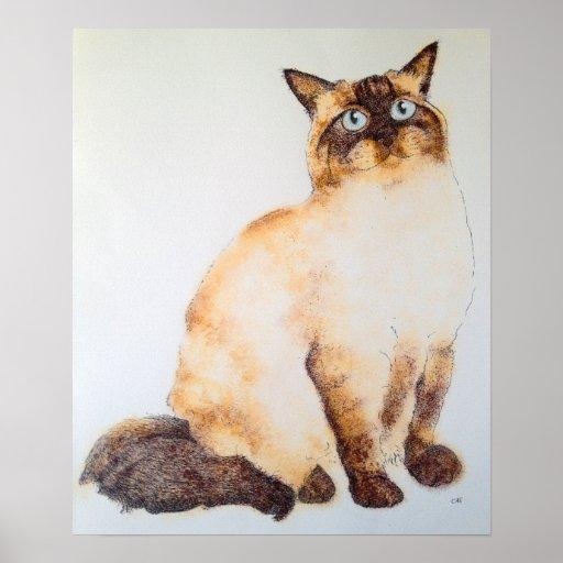 Ragdoll Cat Posters