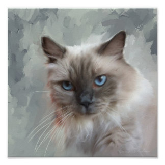 Ragdoll Cat Poster
