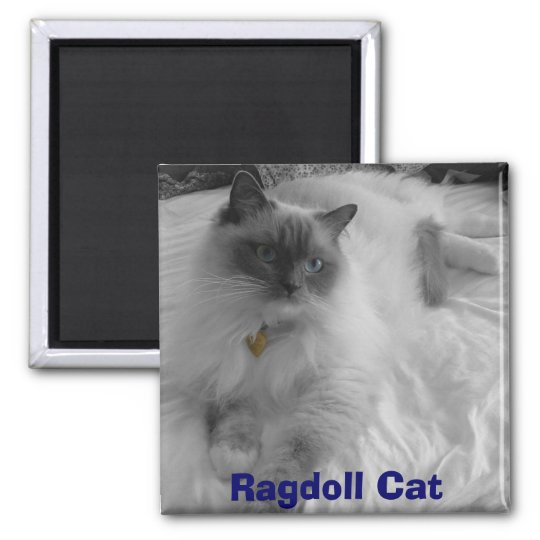 Ragdoll Cat Square Magnet