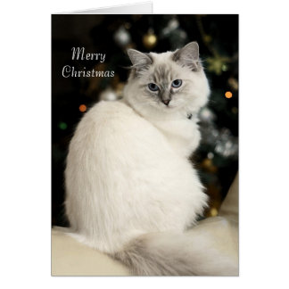 Ragdoll Christmas Card
