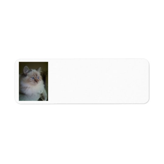 Ragdoll Himalayan Cat Return Address Labels