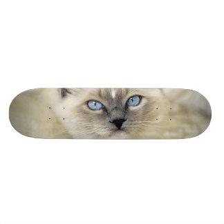 Ragdoll kitten 18.1 cm old school skateboard deck