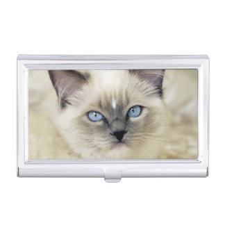 Ragdoll kitten business card cases