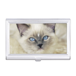Ragdoll kitten business card holder