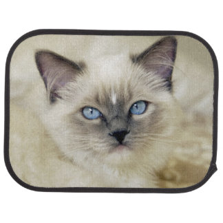 Ragdoll kitten car mat