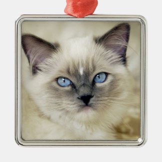 Ragdoll kitten christmas ornament