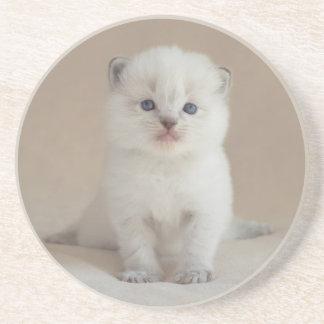 Ragdoll Kitten Coaster