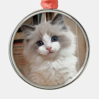 Ragdoll Kitten Cutie Christmas Ornament