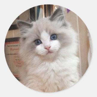 Ragdoll Kitten Cutie Round Sticker