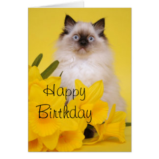 Ragdoll kitten greetings card