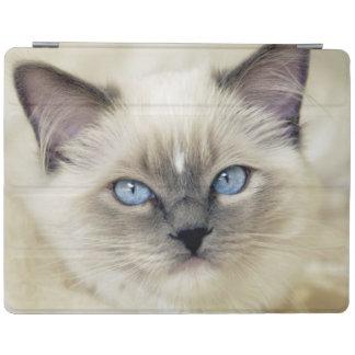 Ragdoll kitten iPad cover