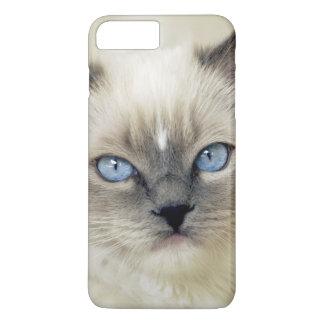 Ragdoll kitten iPhone 8 plus/7 plus case