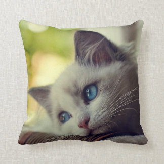 Ragdoll Kitten Looking Out The Window Cushion