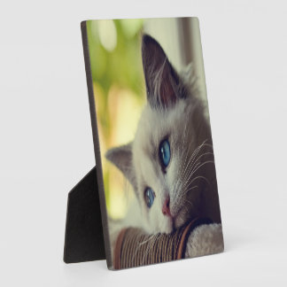 Ragdoll Kitten Looking Out The Window Plaque