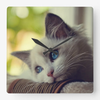 Ragdoll Kitten Looking Out The Window Square Wall Clock