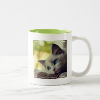 Ragdoll Kitten Looking Out The Window Two-Tone Coffee Mug