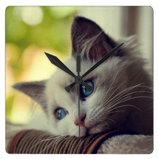 Ragdoll Kitten Looking Out The Window Wallclock
