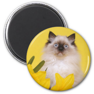 ragdoll kitten magnet