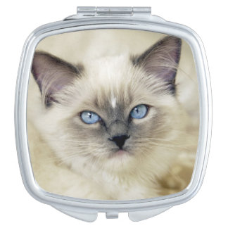 Ragdoll kitten mirrors for makeup