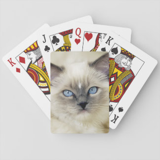 Ragdoll kitten playing cards