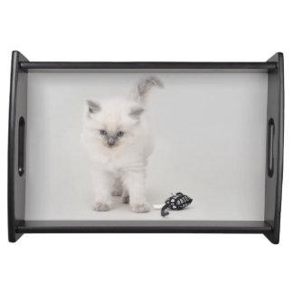 Ragdoll Kitten Serving Tray