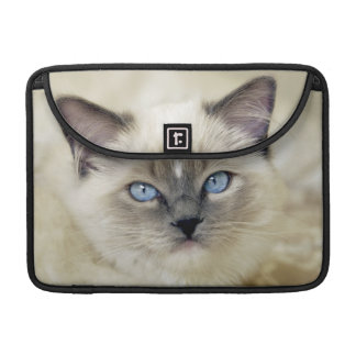 Ragdoll kitten sleeve for MacBook pro
