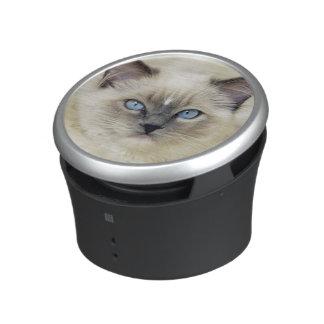 Ragdoll kitten speaker