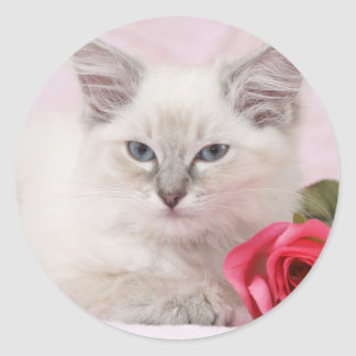 ragdoll kitten stickers