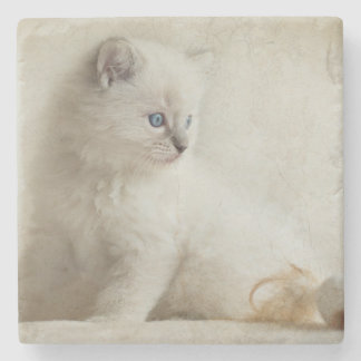 Ragdoll Kitten Stone Beverage Coaster