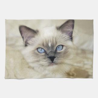 Ragdoll kitten tea towel