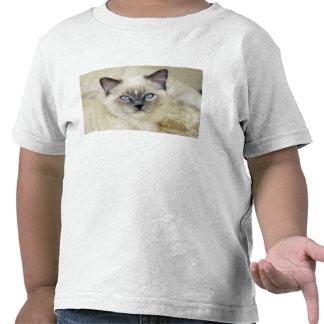 Ragdoll kitten tee shirts