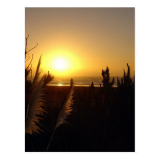 Raglan Sunset Postcard