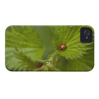 Rain Covered Ladybugs iPhone 4 Cases