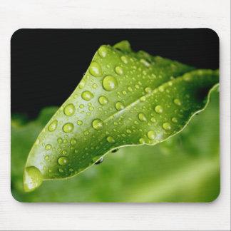 Rain drop leaf mouse pad