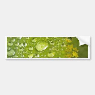 Rain droplets on a green leaf bumper sticker