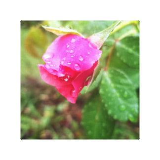 Rain-dropped Rose Canvas Print