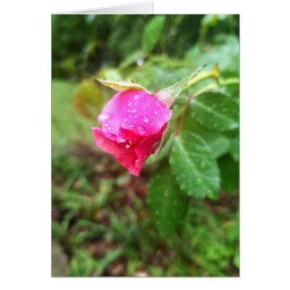 Rain-dropped Rose Sympathy Card