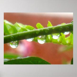 Rain drops &  fern leaves poster