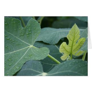 Rain drops on fig leaves greeting card