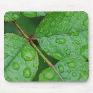 Rain Drops on Leaves mf Mousepad