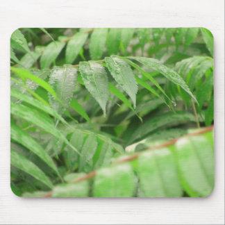Rain Drops On Sumac Leaves Mouse Pad
