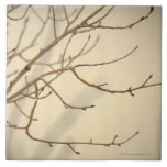 Rain Drops on Tree Branches Tile